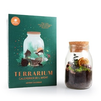 rf.-50167330-calendrier-de-lavent-terrarium