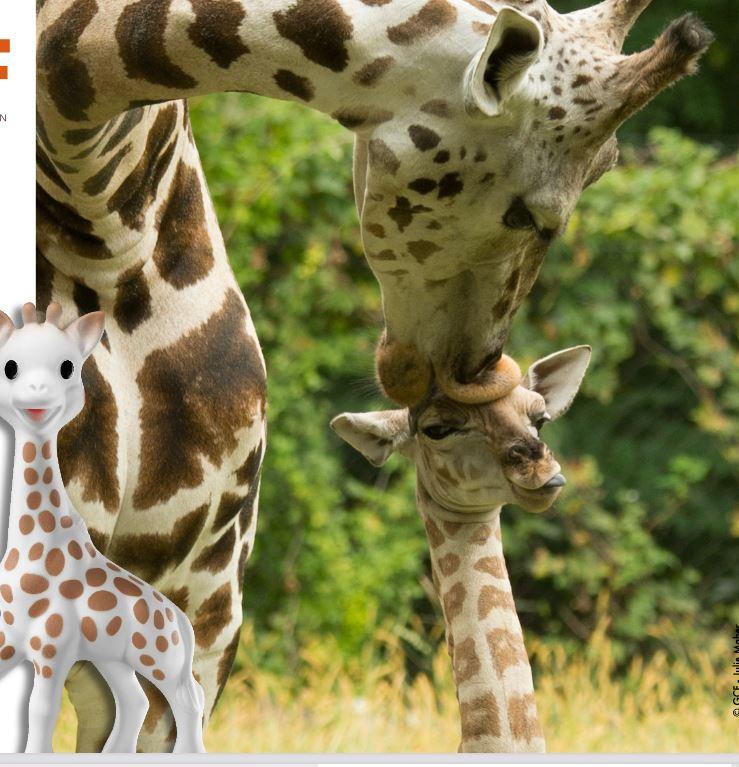 girafe-et-sophie